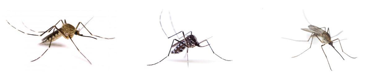 trattamento zanzare